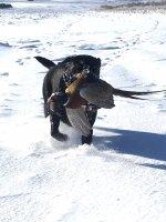 Hunt, 2019-12-1, SD pheasant hunt (10).JPG
