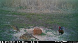 042721 - F0I - Rooster & 2 Hens.jpg