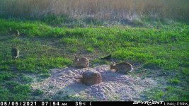 050521 - F0I - 4 Rabbits.jpg