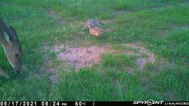 051721 - F15 - Doe & 2 Hens.jpg